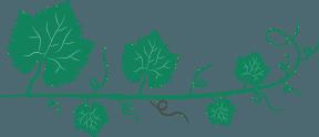 Decoration: vine leaf