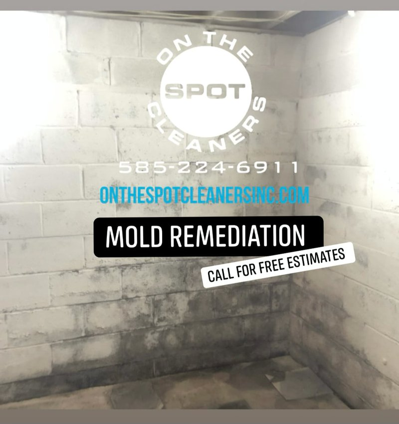 mold-remediation-1.jpg